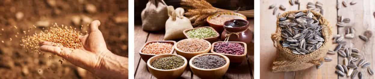 semillas para una dieta con diabetes